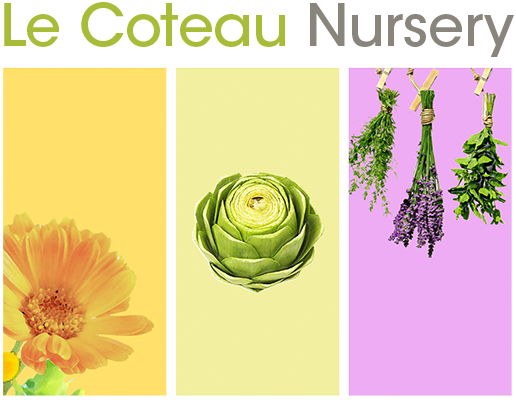 Le Coteau Nursery - Logo - Established in 1956, Le Coteau Nursery is the premier supplier of fruit trees to Southern Vancouver Island and Gulf Islands.